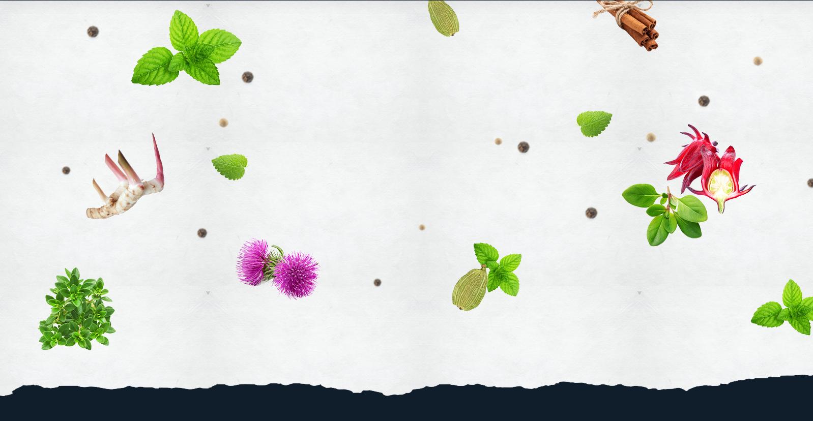 Des plantes,  de l'eau et  des bulles !